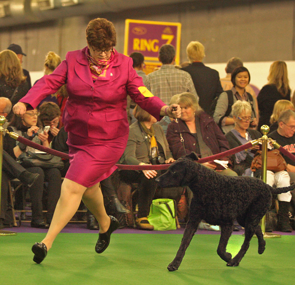 Sue Davis and her retriever, Flash, at the Westminster Kennel Club Show at Madison Square Garden in New York.