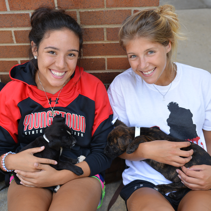 Puppy Palooza in the Andrews Student Recreation & Wellness Center is part of YSU's Welcome Week.